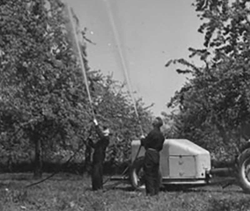 DDT en de ooievaar